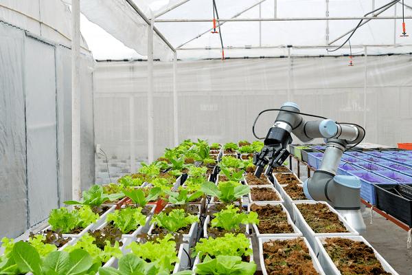IoT ngành thực phẩm
